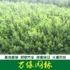 胶东卫矛图片-胶东卫矛价格-绿化苗木基地直销