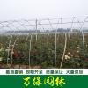 品种月季 丰花月季 微型月季 地被月季 蔷薇 玫瑰