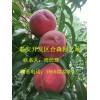 新品种桃树苗 新川中岛桃树苗价格 新川中岛桃树苗多少钱一棵
