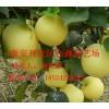 哪里有卖黄金梨树苗的 黄金梨树苗多少钱一棵