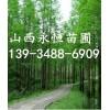 占地1米白皮松价格+1米占地白皮松价格+1米白皮松占地树