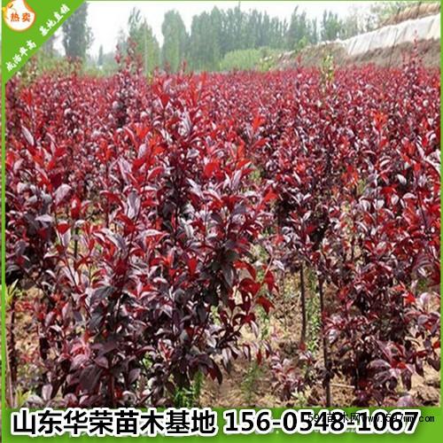 壁纸 成片种植 风景 植物 种植基地 桌面 500_500