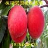 中油4号桃树种苗图片中油4号桃树种苗2公分粗的一棵多少钱