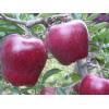 早红星苹果苗价格  新红星苹果口感怎么样