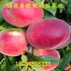 晚熟冬桃桃树苗报价晚熟冬桃桃树苗3公分粗的产量怎么样