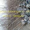 2公分梨树苗基地 3公分梨树苗批发价 采摘好品种秋月梨树苗