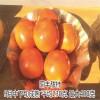 甜柿子苗那里有卖 柿子苗批发价格低