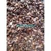 江苏木瓜小苗价格优质木瓜种子臭桔枸橘枳壳腊梅种子快递全国