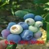 2018年北蓝蓝莓苗价格 南陆蓝莓苗种植技术 保姆式扶持